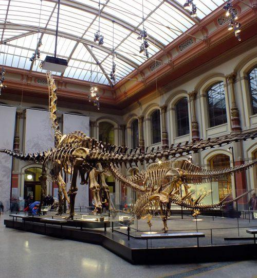 מוזיאון הטבע ברלין
